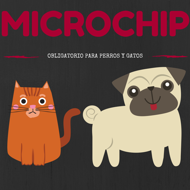 Microchip_(1).png